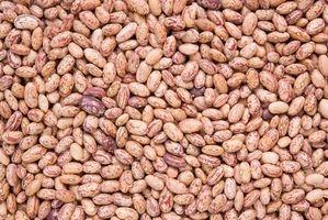 Hvordan Grow Pinto Bean Planter