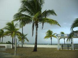 Hvordan Landscape rundt et basseng i Florida