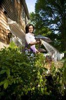 Hvor ofte bør du Vann Potet planter?
