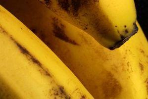 Tissue Kultur & Banana Planter