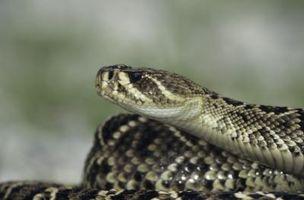 Hvordan å holde seg unna Snakes i Florida