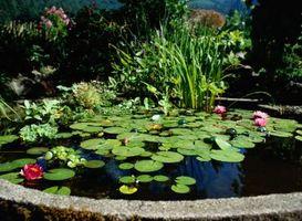 Hvordan måle Pond Water Omsetning & Filter Flow priser