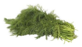 Hvordan Plant Dill Weed