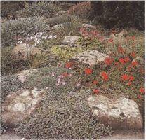Hvordan Grow Rock Planter