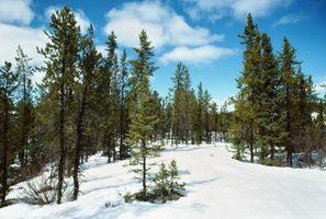 Wild & trær Busker Native til Colorado