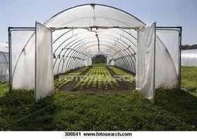 Hvordan lage Billige Jord for Drivhus Planter