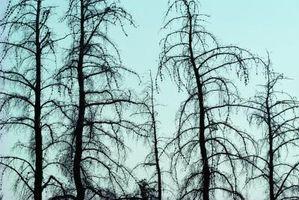 Hvordan Dig Out et dødt tre