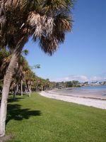 Når skal Gjødsle St. Augustine Grass i Florida