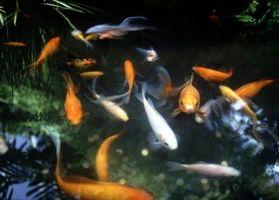 Fish Pond Pumper og filter
