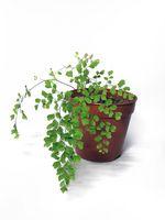 Hvordan Repot Tropical Plants