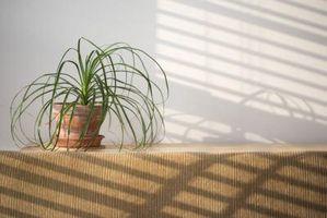 Kvitte seg med sopp mygg på Stueplanter med eddik