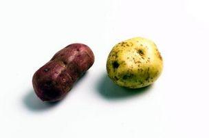 Hvordan Grow en potet i et glass vann