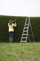 Stiger for Hedge Cutting