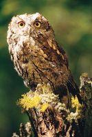 Hvordan å jage bort Owls