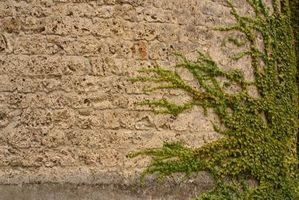 Potte Vining House Plants