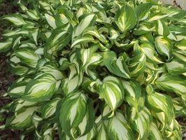 Sone 7 Garden Plants