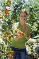 Organisk Kalium for Plants