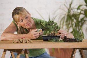 Hvordan Sculpt Bonsai Trees