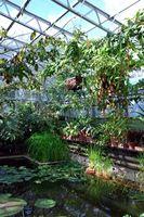 Hva slags planter kan dyrkes i en Green House?
