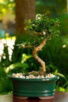 Slik Care for Bonsai & Bamboo Planter