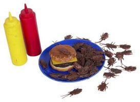 Hva Foods Most Tiltrekke Kakerlakker