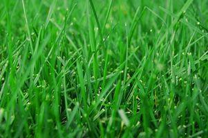 Klesvask tips for å fjerne gress Flekker