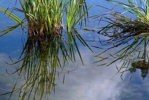 Laminatgulv som tåler vann
