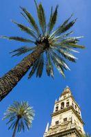 Hva å gjøre med en Rotted Palm Tree Trunk