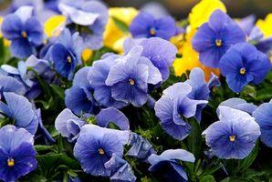 De beste blomstene for pressing