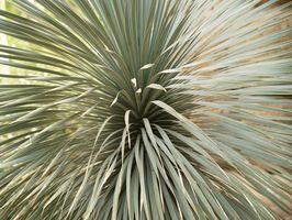 Afrikanske Planter med merkelige bruksområder