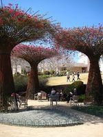 Hvordan fikk maurerne Lag Water Gardens?