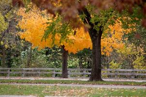 Hvordan Trim Trees på Boundary Lines
