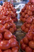 Hvordan å dyrke tomater i Michigan