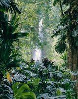 Komponentene i en Hawaiian Forest Ecosystem