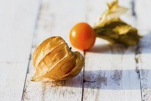 Hvordan Grow Ground Cherries