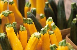 Hvordan Grow Gule Zucchini