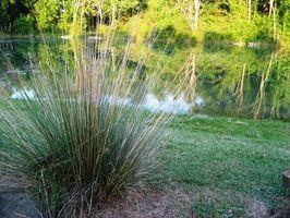 Mikroskopisk Pond Planter