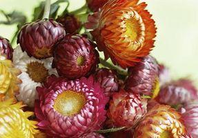 Hvordan Clean Tørkede blomster