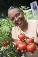 Hvordan velge Frukt og grønnsaker for hagen din