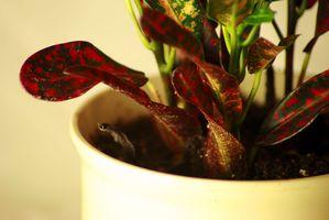 Hvordan Naturligvis bli kvitt Gnats på en potteplante