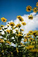 Typer og typer blomster