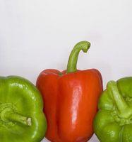 Hvorfor skulle Mine Pepper plantene ser skranglete når vi har hatt mye regn?