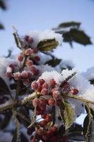 Ville planter i vinter