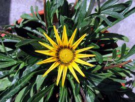 Plantegjødsel mangel Signs