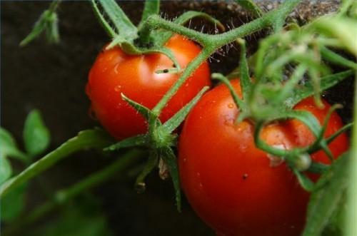 Hvordan forberede en grønnsakshage
