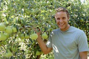 Hvordan å klone en Pear Tree