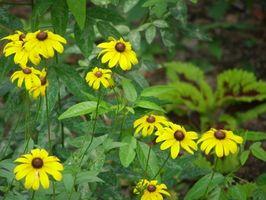 Best Blomster til Plant i Florida Panhandle