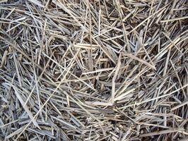 Hvordan bruke Pine Straw Som en Mulch i en grønnsakshage