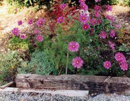 støvet rosa blomst