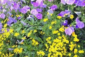 Vil plantene vokser bedre Hvis bladene er skyggelagt eller i solen?